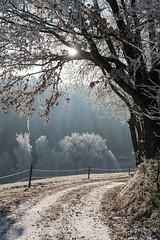 A9900884_s (AndiP66) Tags: winterstimmung altbüron melchnau luzernerhinterland rottal kanton luzern cantonoflucerne bern cantonofberne nebel fog mist gefroren reif frosted frozen hoarfrost sun sonne sunrays sonnenstrahlen winter sony sonyalpha 99markii 99ii 99m2 a99ii alpha ilca99m2 slta99ii sigma24105mmf4dghsmart sigma 24105mm f4 amount andreaspeters