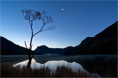 The Lone tree (jos.pannekoek) Tags: buttermere lakedistrict cumbria moon twillight bluehour landscape uk greatbritain england engeland d500 tokina1116mmf28 tokinaaf1116mmf28 tokina nikon