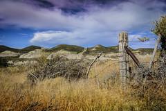 campo patagnico (Mauro Esains) Tags: patagonia potros caballos campo tranquilidad flores pasto comiendo cerros alambrado tronco poste matas malaspina abrojos observando paisaje