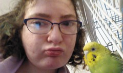 Budgie pout (emargot22) Tags: budgie budgerigar pets animals cute