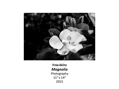 """Magnolia • <a style=""""font-size:0.8em;"""" href=""""https://www.flickr.com/photos/124378531@N04/31178557835/"""" target=""""_blank"""">View on Flickr</a>"""