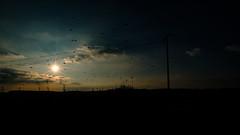 2016 10 29 - Sunset-6 (OliGlo1979) Tags: fuji luxembourg xt2 xf1655 landscape sunset horse silhouette