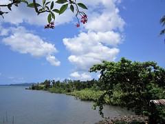PROVINCE OF SORSOGON (PINOY PHOTOGRAPHER) Tags: sorsogon city bicol sea tourism attraction plant tree bicolandia luzon philippines asia world