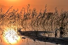 Sunrise at Lake Pieni-Kupsunen (Kuhmo, 20130713, 4:21 am) (RainoL) Tags: 2013 201307 20130713 finland fog july kainuu kn krvpud kuhmo lake mist morning pienikupsunen reflection summer sunrise