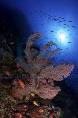 2013 09 VOISIN INDONESIA-6677