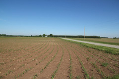 Farmland — Union Township, Ross County, Ohio (Pythaglio) Tags: road county trees ohio field landscape concrete ross corn pavement farm telephone union farmland soil dirt rows land poles isolated township recently paved planted