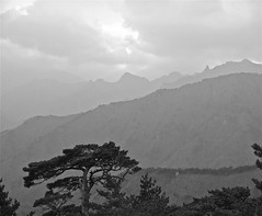 Not Quite Solitary B&W (Patrick (Essex Masque)) Tags: blackandwhite cloud mountain tree nature fog canon hike lonely southkorea seoraksan