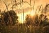 One More Sunset... (Armine Abrahamyan) Tags: trees light sunset sky sun sunlight tree nature grass sunshine clouds landscape evening abend licht nikon natur himmel wolke romantic nikkor bäume baum romantik d300 armine landshcaft sonennuntrgang d300s abrahamyan