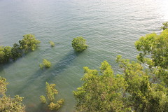 Mangroven-Wald, Darwin (betadecay2000) Tags: sea water see meer australia darwin mangrove australien northern wald territory topend mangroven ökosystem