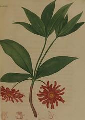 Anglų lietuvių žodynas. Žodis anise plant reiškia anyžių augalų lietuviškai.
