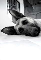 Viera-Byn_1 (Manuel D Sánchez) Tags: dogs perros dogos