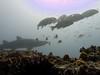 grey nurse and school of morwong (ce2de2) Tags: ocean fish shark underwater diving scubadiving reef coffsharbour greynurseshark southsolitaryislands visibility1015m