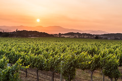 Orange sky in the valley (Dooquie) Tags: california sunset vineyard unitedstates sundown winery grapes napavalley napa orangesky pinksky sunwashed canoneos5dmarkiii