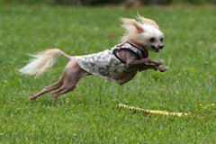 "LuLu In Motion 6 • <a style=""font-size:0.8em;"" href=""http://www.flickr.com/photos/96196263@N07/14696229589/"" target=""_blank"">View on Flickr</a>"