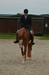 DSC_4003 (c0ugh) Tags: horse girl barn paint pretty farm riding chestnut horseshow stable blueeye equine quarterhorse nepha