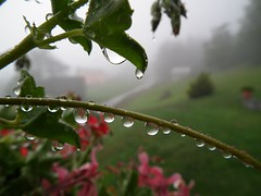 ...perle sui gerani.. (Romano1939) Tags: pioggia gocce gerani riflettere
