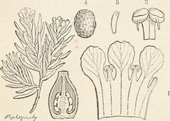 Anglų lietuvių žodynas. Žodis axile placentation reiškia aštraus įdėklavimas lietuviškai.