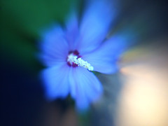 image (WhaleDaughter) Tags: lensbaby flora lm10 iphone5s