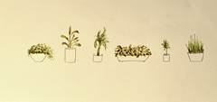 plantas inventadas (Efe Godoy) Tags: verde planta brasil plantas vaso desenho aquarela plantinhas
