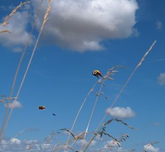 Two kites in the sky (fewpictures4u) Tags: sky kite clouds flying kites
