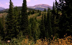 The Bridger Mountains (The VIKINGS are Coming!) Tags: bear mountains nature pine forest hiking forestry timber bare wildlife trails moose alpine rivers fir wilderness treeline spruce arboreal rockymtns