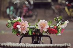 (Eiimeon) Tags: flowers red holland netherlands amsterdam bike rose fleurs rouge 50mm nikon bicycles colored vlo color guidon d300s eiimeon