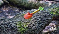 _MG_2337_edit (plw1053) Tags: wood red tree green texture forest toy handle wooden moss soil bark fallen trunk lichen tool asfound spade