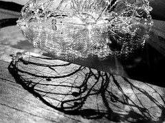 Spectre et projection (Ridha Dhib) Tags: art texture way walking eau arte camino lumire contemporary web horizon performance spiderman shell fil ombre projection compostela plexiglas concha sell paysage espagne artcontemporain arrangement numrique marche rituel chemin spectre landart bois horizonte transparence forme araigne iphone coquille compostelle rhizome translucide colle tape agencement translcido pegamento contempornea rizoma cartographie archologi disposicin pistoletcolle tendard viaturonensis mrelle chemindetours filsoie collethermique ridhadhib rhizome66