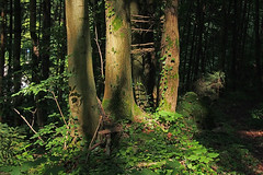 The forest -- (rotraud_71) Tags: trees summer sun forest germany bavaria shadows badreichenhall berchtesgadenerland vanagram blinkagain