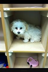 Puppy Eloise