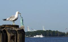 Wings of Liberty (Fil.ippo) Tags: newyork statue liberty candid seagull 200 streetphoto 06 statua filippo gabbiano libert d7000 filippobianchi