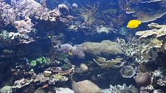 Valencia Aquarium, Spain (2014.3.20) (ChihPing) Tags: ocean park travel blue valencia aquarium video spain marine olympus omd  oceanografic      loceanogrfic oceanogrfic em5