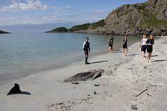Dead Pilot whale on Scoor Beach