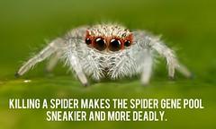 spider humour meme