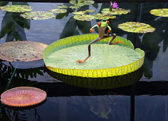 """DUC #806  - """"GANGNAM STYLE"""" (mark_rutley) Tags: garden dance pond funny manipulation humour frog watergarden lilly laugh lillypad downunderchallenge gangnamstyle"""