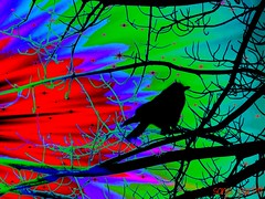 blackbird (Sonja Parfitt) Tags: tree colors manipulated bright blackbird