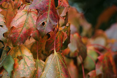 Turning to autumn (Claire Wroe) Tags: autumn red orange colour tree green fall nature leaves yellow turn manchester gold leaf stem natural valley chorlton stalk turning mersey colouful cmwd myautumn
