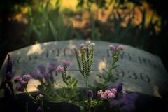Around Oakland Cemetery (Brent Betz) Tags: flowers atlanta sunset sunlight leaves warm gravestone oaklandcemetery