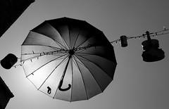 Where is Mary Poppins? (Bernard M. Piette) Tags: umbrella blackwhite nikon violin namur grayshades d300s infinitexposure