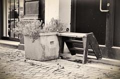 20140916_175006_0004-bewerkt.jpg (Bruno De Deken) Tags: street flower bench belgium belgie streetphotography antwerp antwerpen bloem straat bankje 2014 bloempot straatfotografie