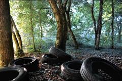 WTF ! (MagiCshoot) Tags: forest foret pneu bois salet d600 ordure dechet realite philippechaleil