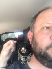 (Todd Money) Tags: spanky chaka pet exotic marmosetmonkey monkey