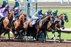 Gates Sprung (kimpossible pics) Tags: horseracing racehorse horse throughbred equine racetrack jockey losalamitos losalamitosracetrack cypress lamu tiagopereira agentdinozzo martinpedroza broadwaynika agapitodelgadillo valentineboy ritoalmanza blacktie brayonpena