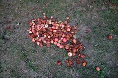 IMG_7037 (nicole.schmidtova) Tags: photography czechrepublic canon canon60d czech countryside nature simply autumn fall