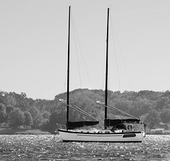 Week 41: B&W- Wealth (shannon_blueswf) Tags: blackandwhite bw sail sailboat sailing lake 52weekphotochallenge photochallenge2016 photochallengeorg wealth nikon nikond3300