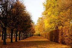 Yellow day (silfoglia) Tags: park autumn yellow trees tree leaves foglie autunno giallo nature natura