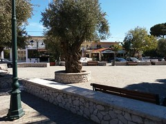 (Psinthos.Net) Tags:  psinthos village square psinthossquare psinthosvillage    villagecenter      stonewall day sunnyday light sunlight     shadow bluesky sky     olivetrees treetrunk   trees planetree   treebranches  bench benches    pinetree  houses  noon    autumn october