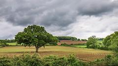 Summer storm (frankshepherd2) Tags: scenery landscape farm countryside