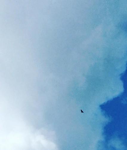 Habe heute einen #adler gesehen. Erst gehört, dann gesehen.  #eagle #upperaustria #ennstal