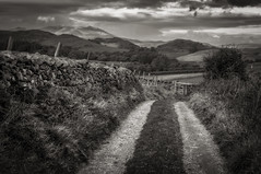 Lake District Farm Track (Alan E Taylor) Tags: agriculture atmospheric bw bankhousefarm blackwhite blackandwhite cloud cumbria dramatic drystonewall england europe farm fields hallthwaites hill lakedistrict landscape millom mono monochrome moody mountain nikcolorefexpro track trail tree valley view unitedkingdom